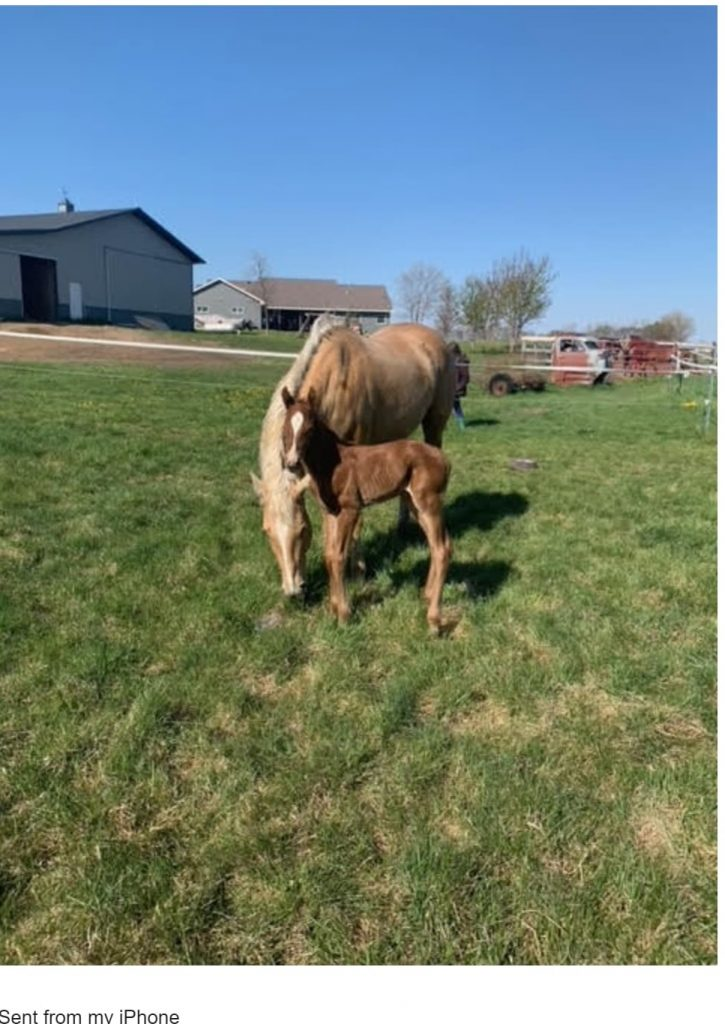 A Happy Client Names a Newborn Horse In Honor of The JetRails Team
